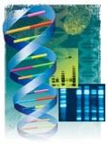 DNA-test